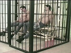 Two convicts are so horny in jail cell.