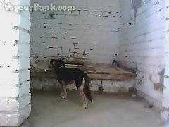 beach toilet-5