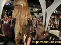 Wild dancing bear evening with hot female audience