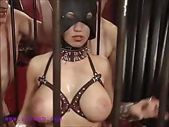 Lida in cage