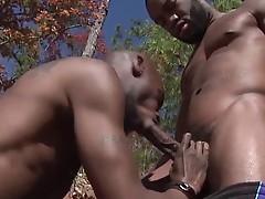 Black Rod and Phenix