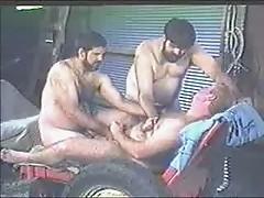 Farm-Bears
