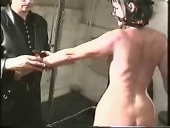 british pain present horse slaves